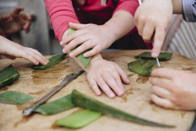 dr.green-aloeverabladeren-kinderen2
