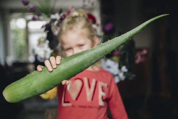 Groot Aloë vera blad dat wordt vastgehouden door een kind - Dr. Green
