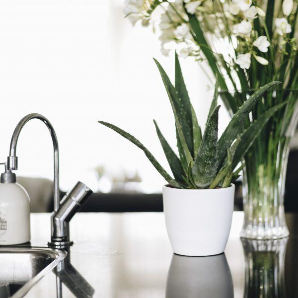 Prachtige Aloë vera plant in een witte pot op het aanrecht - Dr. Green