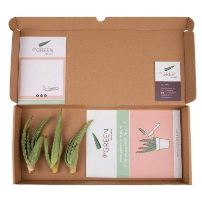 Aloë vera stekpakket - 3 Aloe vera stekjes in een doosje - Baby Green - Dr. Green
