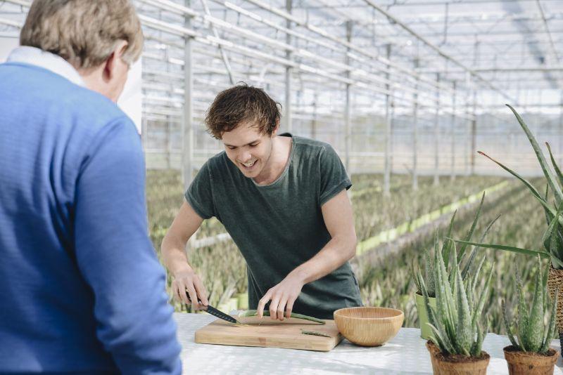 Freek aan het werk met Aloë vera snijden voor 100% natuurlijke huidverzorging - Dr. Green Aloë vera kwekerij