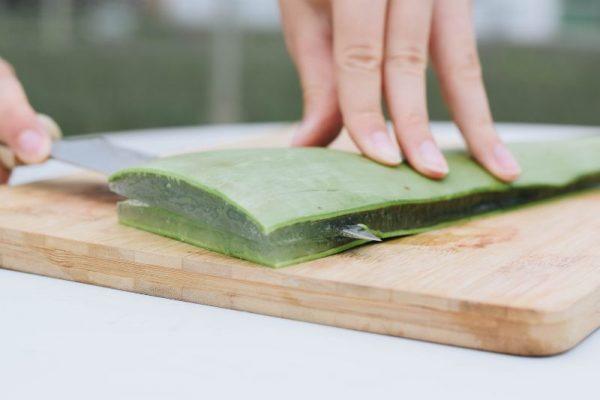 Aloe vera blad snijden Dr. Green